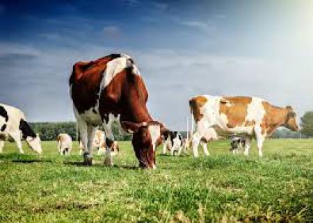 Internacionalización de la Nutrición Animal