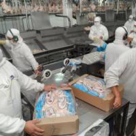 Apertura del mercado uruguayo para exportaciones de pollos