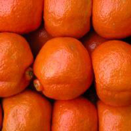 Se abre el mercado de mandarinas a Colombia